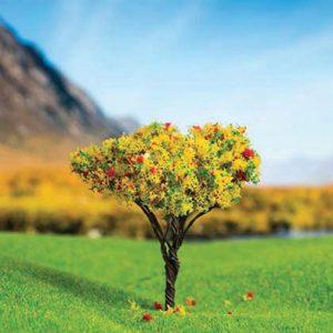 درخت میوه اشل